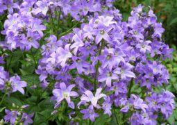 mevsimlik çiçek bakımı