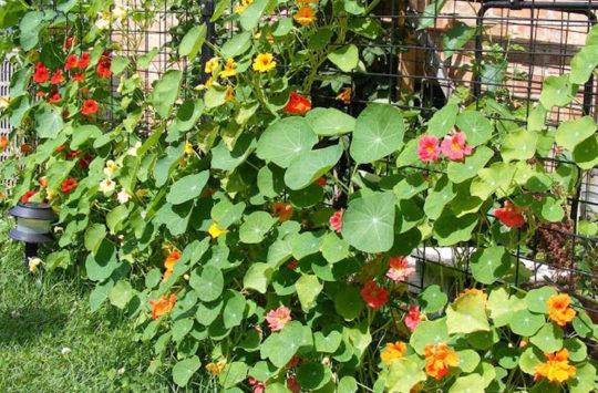 bahceleri-saran bitkiler
