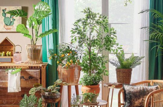 taşınırken-bitkiler
