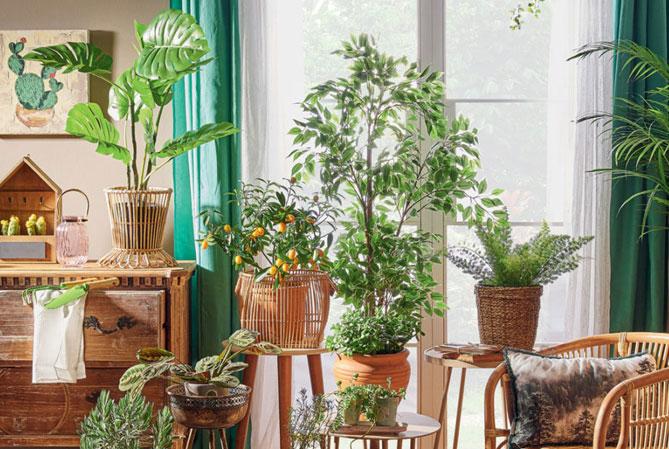 Tasinirken Bitkileriniz Zarar Gormesin Cicekleri Korumanin