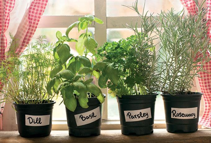 Mutfak bitkileri