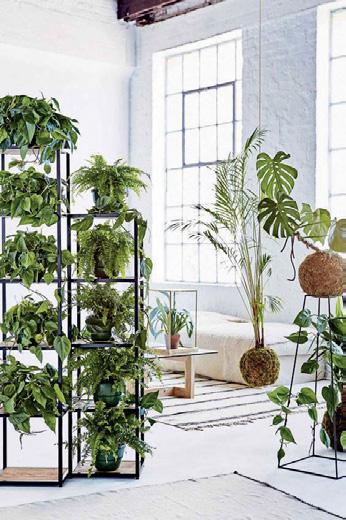Bitkiler ile oda bölme
