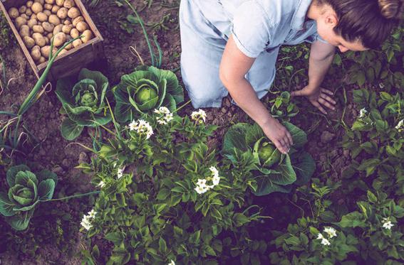 Bahçede bahar hazırlığı zamanı - Bahçe nasıl yenilenir?
