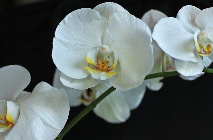 orkide bakımı püf noktaları