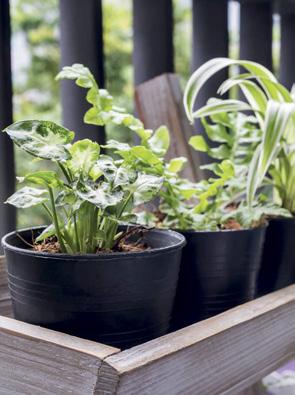 Mart ayı bahçe bakımı ve yapılacaklar