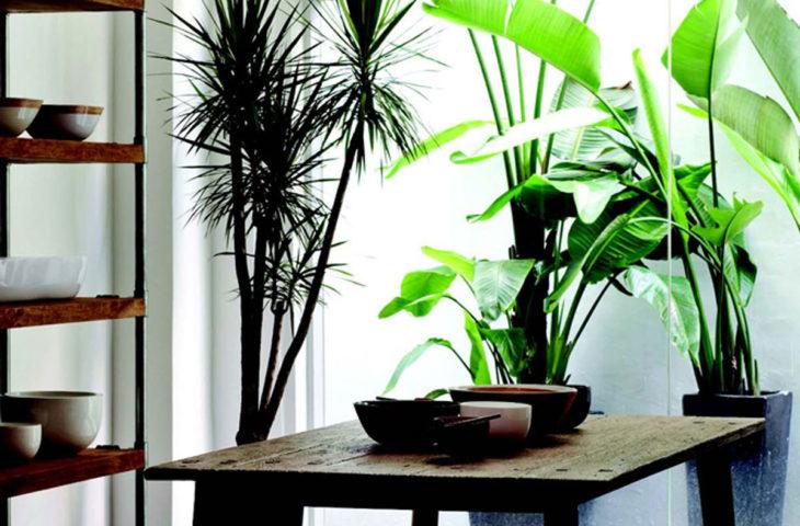 iç-mekan-bitkileri