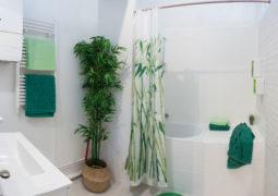 banyo-bitkileri