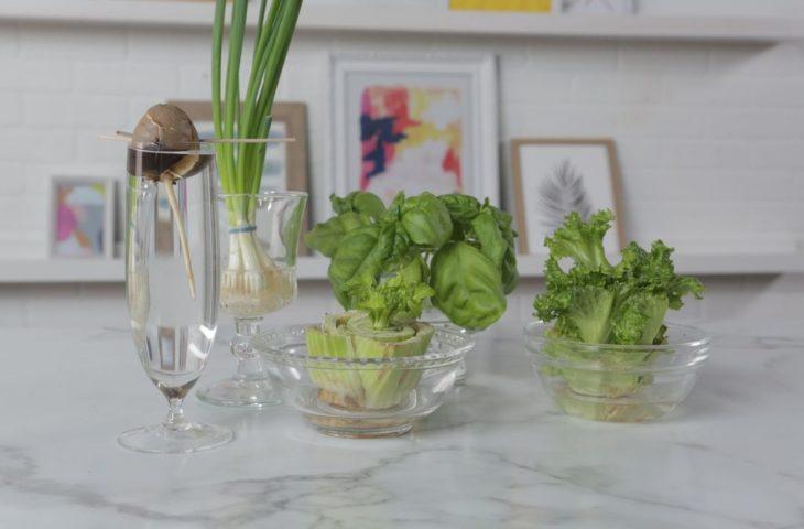 suda büyütebileceğiniz 6 bitki
