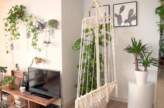 bakımı kolay bitkiler salon bitkileri