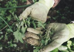 Nisan ayında bahçe bakımı