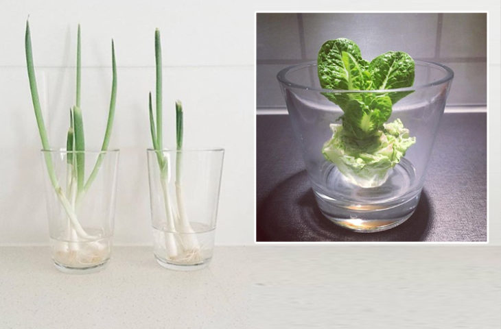 mutfakta suda yetiştirilebilecek sebzeler