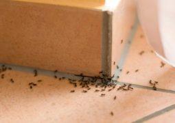 evdeki-böceklerden-kurtulmanın-doğal-yolları