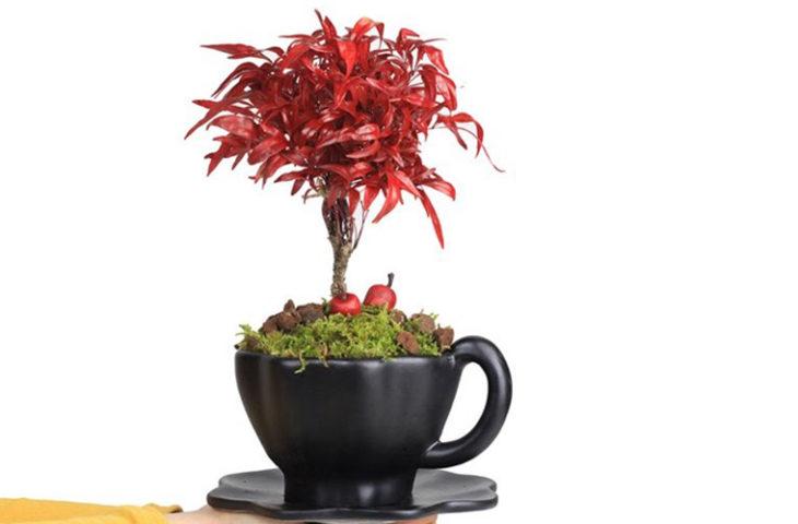 nandina-bonsai