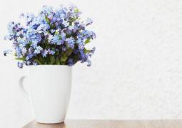 unutmabeni-çiçeği hikayesi ve bakımı püf noktaları