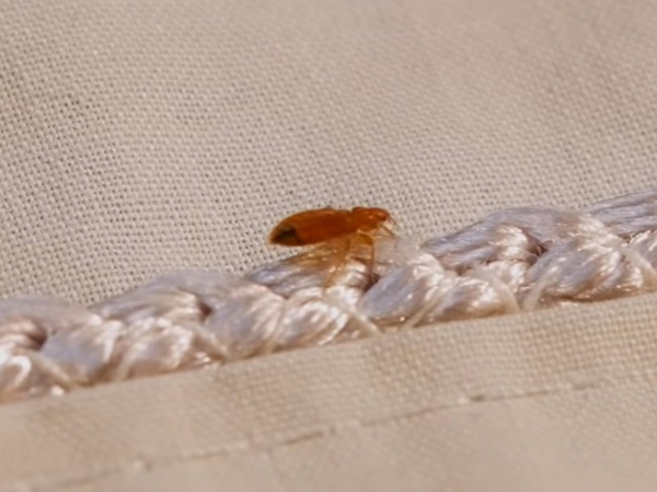 yatak-böcekleri nasıl temizlenir