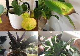 Bitkilerde bir sorun olduğunu anlamanın yolları
