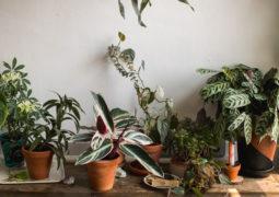 burca-göre-bitkiler