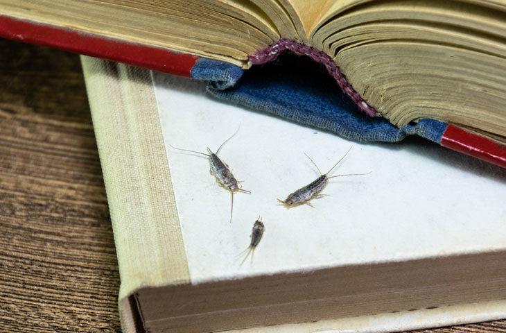 gümüş-böceği, nem böceği, gümüşçül nasıl yok edilir