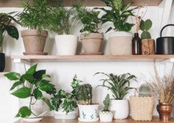 günes-almayan-evler-için-bitki
