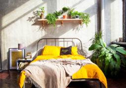 Yatak odasında bulunması faydalı olan bitkiler