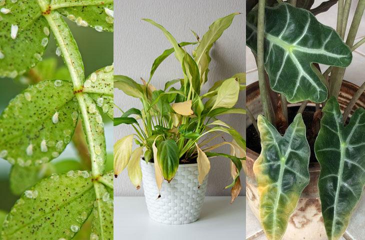 bitki bakımında sık yapılan hatalar