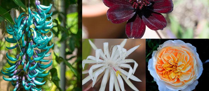 dünyadaki en nadir 15 çiçek