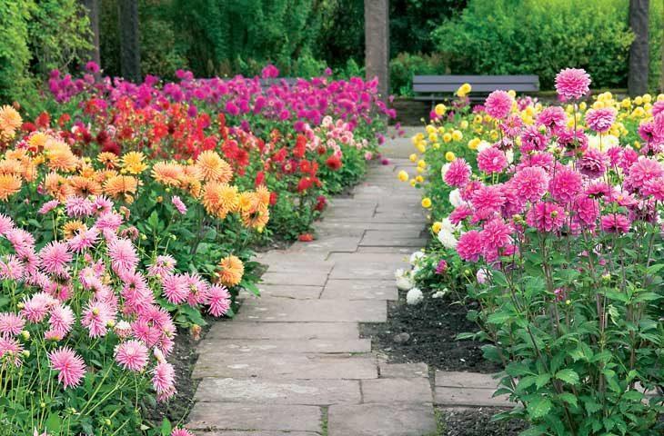 yıldız-çiçeği bakımı