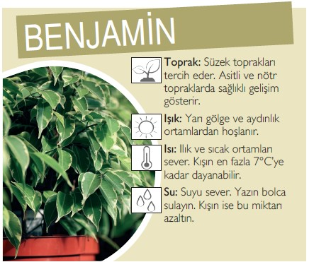 Benjamin bakımı