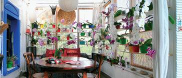 Orkide ev
