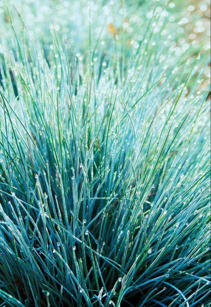 Ayda sadece 1 kez sulamanız gereken 12 iç mekan bitkisi  FETUSCA (FETUSKA)