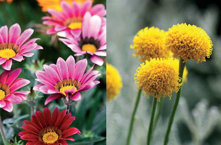 Su Istemeyen Dis Mekan Bitkileri Susuzluga Dayanikli 19 Cicek Evim