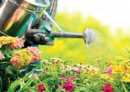bitkileri-sularken-dikkat edilmesi gerekenler