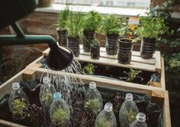 bitkileriniz-kendini-sulasın