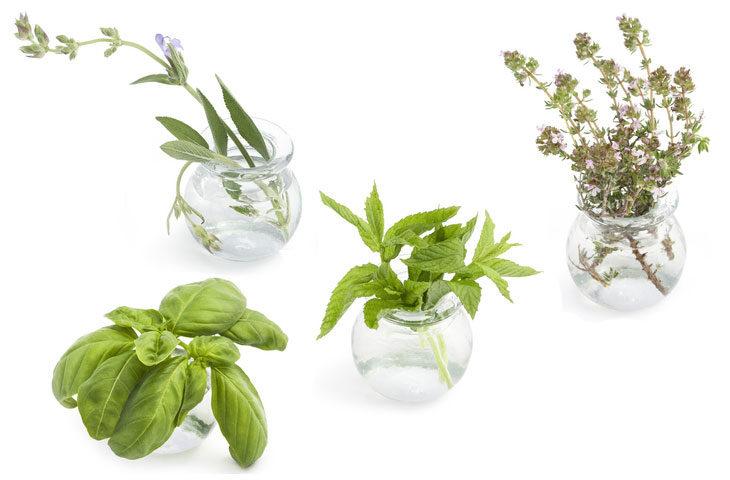 suda-yetiştirebileceğiniz bitkiler