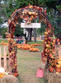 Kuru yapraklarla kapı