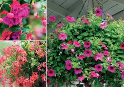 askılı-saksı-çiçekleri