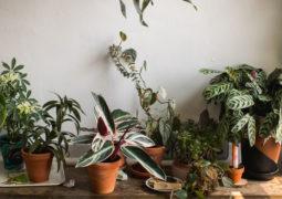 güneş almayan evler için iç-mekan-bitkileri
