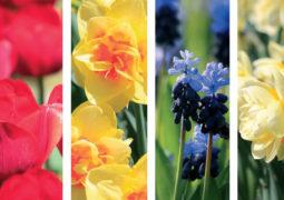 soğanlı bitkiler