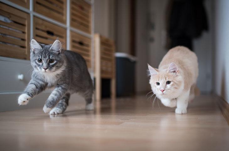 küçük evde kedi beslemek isteyenlere tavsiyeler
