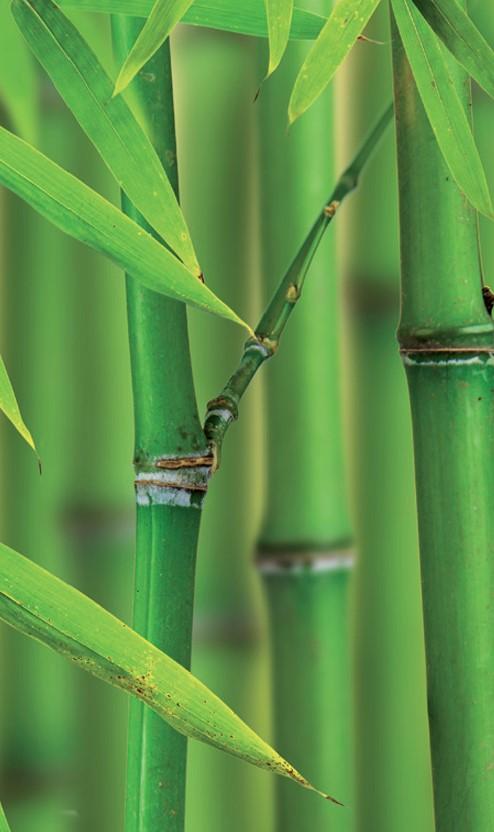 bambu nedir
