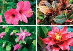 Kış bahçesine hangi bitkiler dikilebilir? İşte renkli kış bahçesi çiçekleri