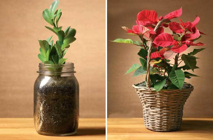 kis-bitkileri
