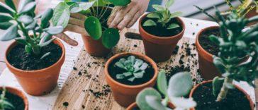 bitki bakımı hileleri