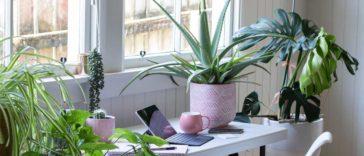 Güneş ışığı seven iç mekan bitkileri