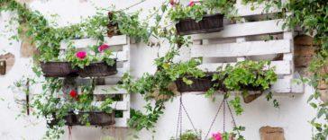 Bitkilerin-daha-uzun-omurlu-olmalari-icin