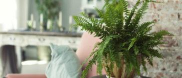 Hangi bitki neye iyi geliyor? İşte 5 farklı bitki ve etkileri